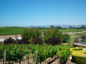 The view from the patio at Domaine Carneros.